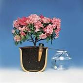 BLUMAT für Zimmerpflanzen, 3er-Packung