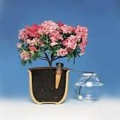 BLUMAT für Zimmerpflanzen, 25er-Packung